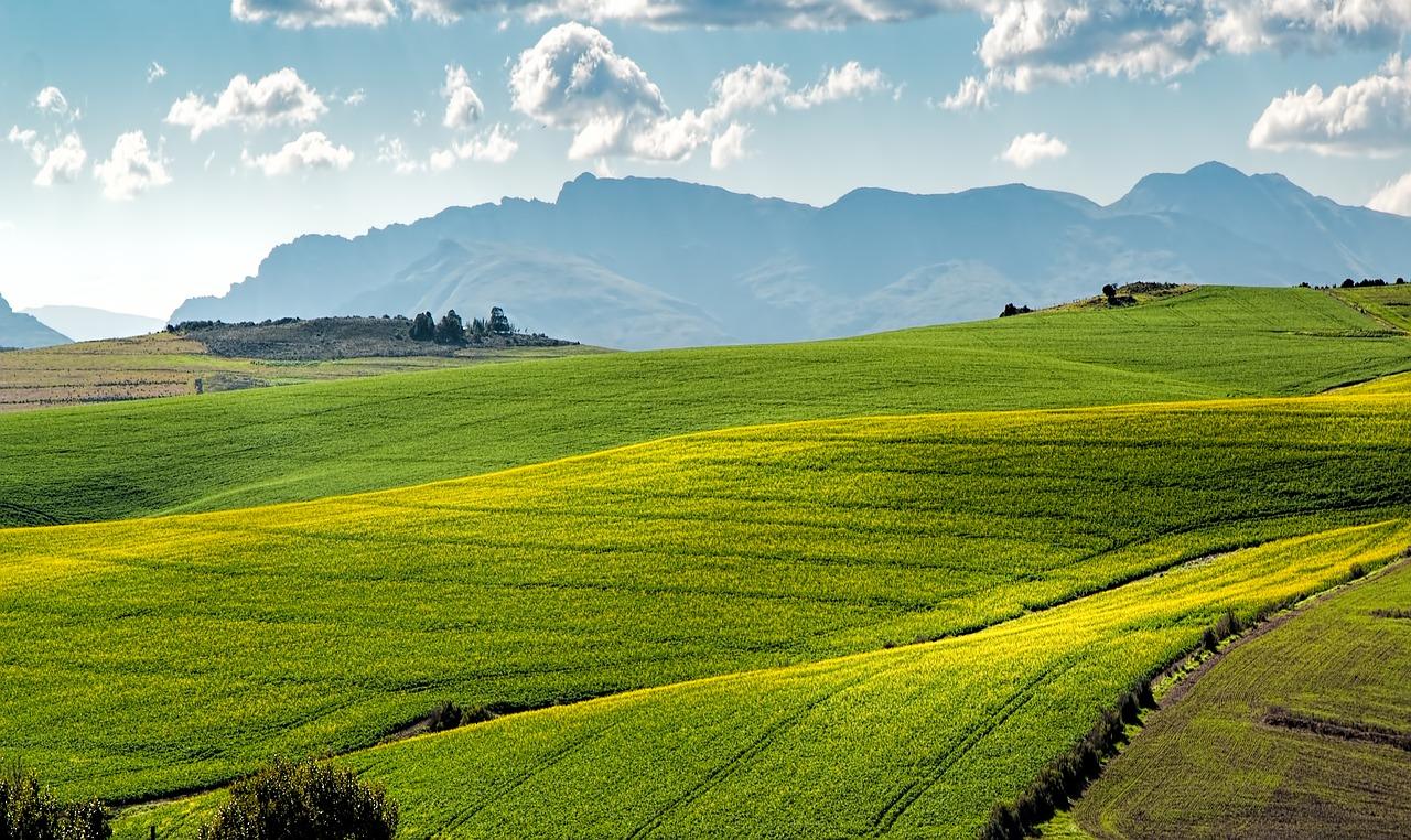 Profesjonalne maszyny rolnicze – gdzie je zamówić?