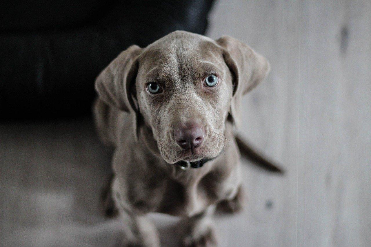Najlepsze produkty dla psów – gdzie je kupić online?